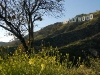 hollywood-hollywood-sign-beyond-tree-and-flowers