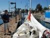 levi-raises-sail