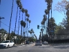 los-angeles-street-lined-with-tall-trees