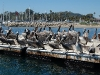 santa-barbara-harbor-pelicans-from-the-side