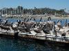 santa-barbara-harbor-pelicans-from-the-side