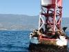 seals-on-a-buoy