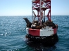 seals-on-buoy-in-open-water