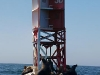 seals-on-buoy-vertical-panorama