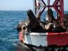 seals-sense-our-approach