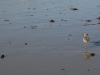 venice-beach-bird-walks-on-beach
