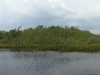 everglades-grassy-mound-in-swamp