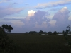everglades-swamp-at-dusk