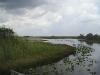 everglades-swamp-corner