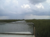 everglades-swamp-from-boat