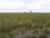 everglades-swamp-panorama