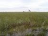 everglades-swamp-panorama