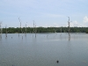 lake-with-dead-trees-north-of-yazoo-city-ms