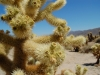 joshua-tree-cactus-light-close-up