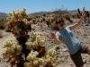 joshua-tree-cagg-falls-into-cactus