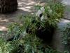 san-diego-zoo-panda-eats-bamboo-hug
