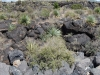 valley-of-the-fires-sample-rocks-and-vegetation-bright-cloudy-sky