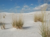 white-sands-grass-pokes-through-sand