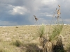 white-sands-plant-against-the-grassy-dunes