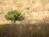 Dinosaur - Tree Against Cliff Wall