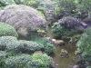 Japanese Garden - Stream