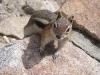 Rockies - Chimpmunk Up Close