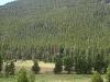 Rockies - One Lone Tree