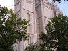 Salt Lake City - Temple Through Trees