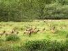 elk-on-parade