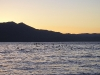 lake-tahoe-birds-perform-sunset-landing
