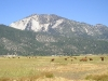 nevada-cows-and-mountain